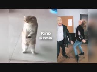 третий не лишний kino remix 2019 котэ на подтанцовке ржака ржач бурунов до слез смешные коты приколы с животными