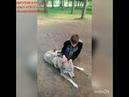 ДетскийАнималЦентр ВесёлыеЗверушки на прогулке в парке Гагарина