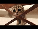 Essayer De Ne Pas Rire - Vidéos Drôles de Chats et de Chiens 27