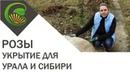 Укрытие роз на Урале и в Сибири