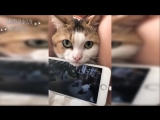 Funny and Cute Cat Videos - Cats and Owners are the best friends.mp4