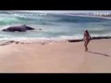 Акулы, кормящие безумие - туша кита l Sharks feeding frenzy - Whale carcass