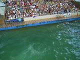В круизе посетили дельфинарий!