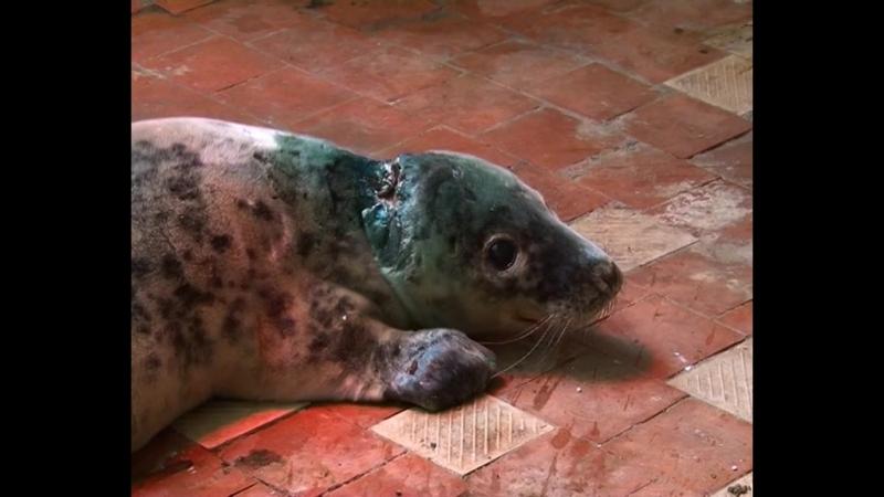 На Балтийской косе планируют организовать центр по спасению тюленей