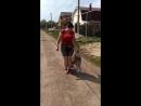 Западно сибирская лайка Джейк Прогулка на улице Тольятти май 2018