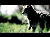 Да не всем же везет Зомб Дворовый кот