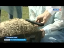 Ставропольские овцы растут без химии Автор Шамиль Байтоков