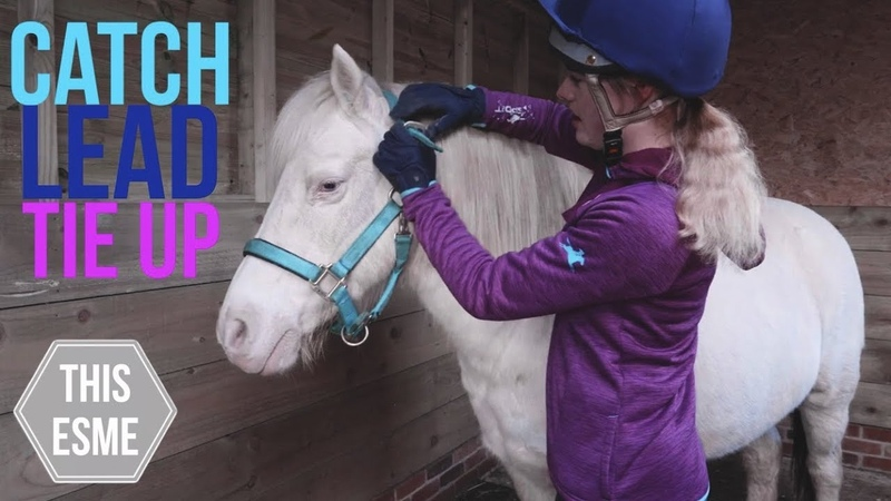 How to put on a Headcollar/Halter, Lead and Tie Up a Horse   Beginner Series   This Esme