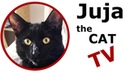 🔴 Juja cute black cat is watching Hilarious cat video on TV