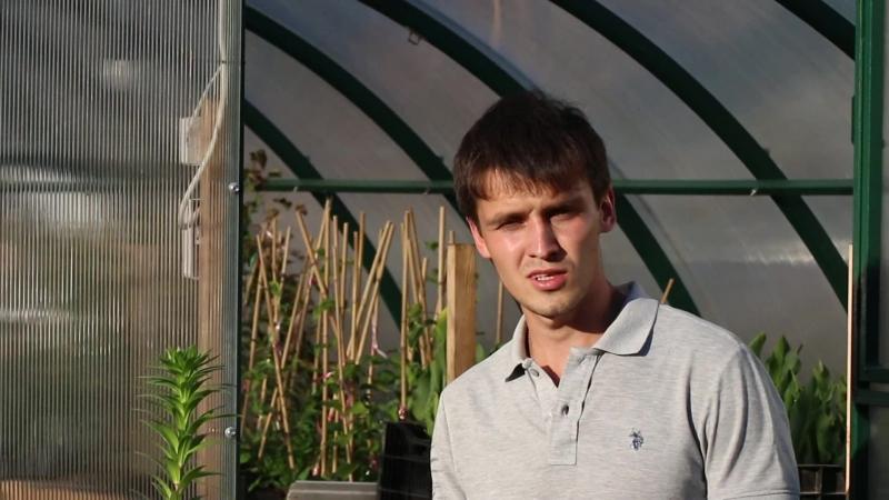 Насекомые-вредители лилий и методы борьбы с ними