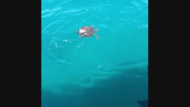 🔥 A turtle defends itself against a shark 🔥