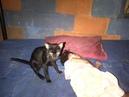 Kucing garong berwarna hitam bertekuk lutut oleh gadis kecil umur belum setahun