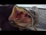 🎣Рыбалка🎣Самые клевые моменты с рыбалки на щуку