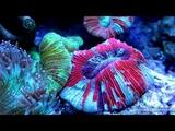 Мой морской аквариум 300 л