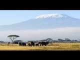 Килиманджаро в