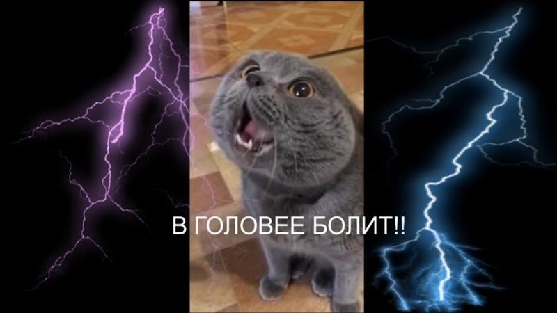 Кот говорит: Голова моя болит