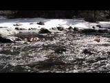 Schumann Resonances Relaxing Nature Sounds 7.83 Hz Binaural Beats