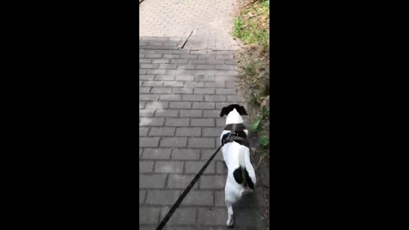 VID-20180612-паулина и леон собака польша