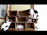 Katzen lieben Kartons -)