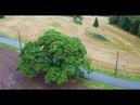 One Year. One Tree. One Drone / Video by Marius Arnesen