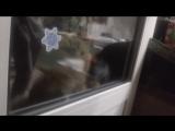 Говорящий кот Яков просит открыть дверь