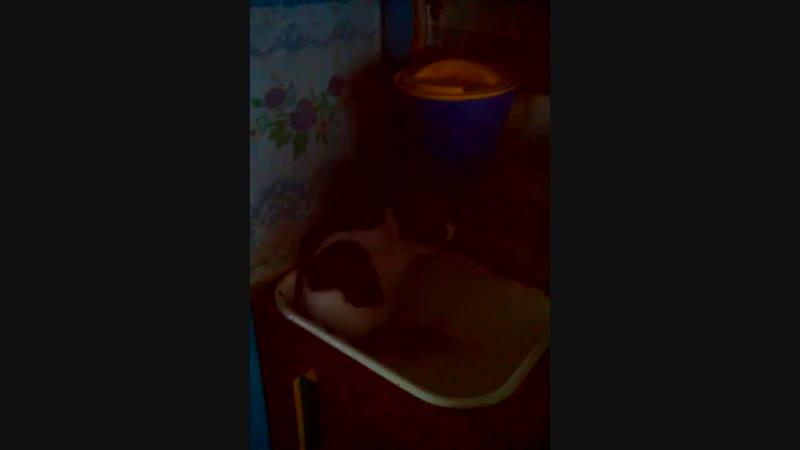 кот хочет пить