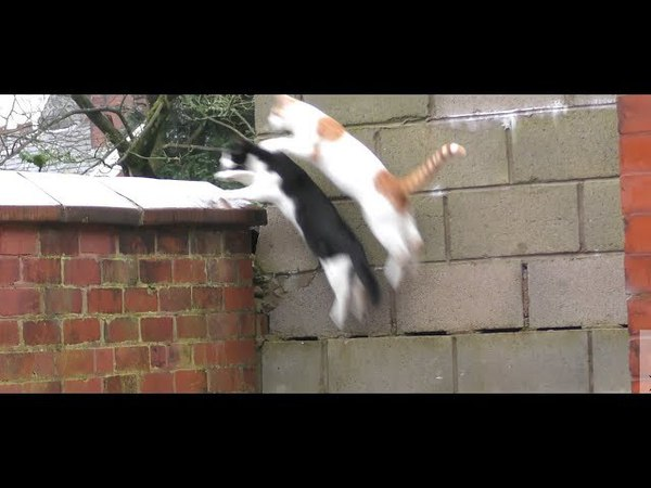 Awkward cats jump
