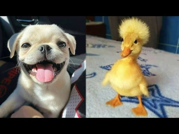 Cute baby animals Videos Compilation cute moment of the animals - Soo Cute! 65