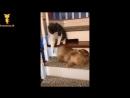 おかしい猫 - かわいい猫 - おもしろ猫動画 HD 109