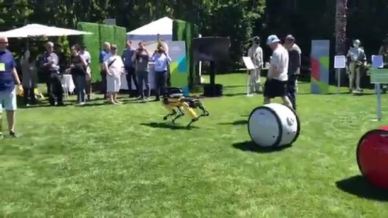 Странная вечеринка MARS 2018_ робособака Spot-mini (Boston Dynamics), робо-бочка Gitta (Piaggio) и дрон