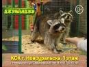 Контактная выставка животных Джуманджи