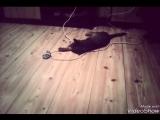 кот дурак