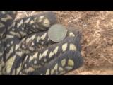 Супер коп!!! Куча монет. и пятак Екатерины! часть первая.