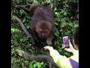 Гопник в мире животных