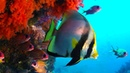 The Coral Reef: 10 Hours of Relaxing Oceanscapes   BBC Earth [NR]