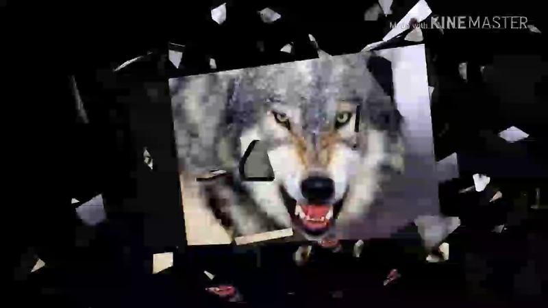 Волки умирают в одиночку Мурат Тхагалегов