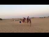 Dubai safari camel riding
