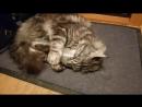 Кот и пойло