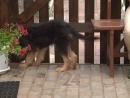 щенок Джессика ждет хозяина