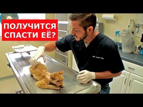Кошка потратила почти все 9 жизней.В ее грудной клетке была печень.Ветеринарное ранчо