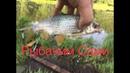 Рыбалка в Подмосковье на реке Пехорка !