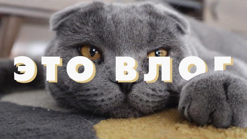 ВЛОГ || Анталия, Starbucks, мое утро и самый милый кот в мире