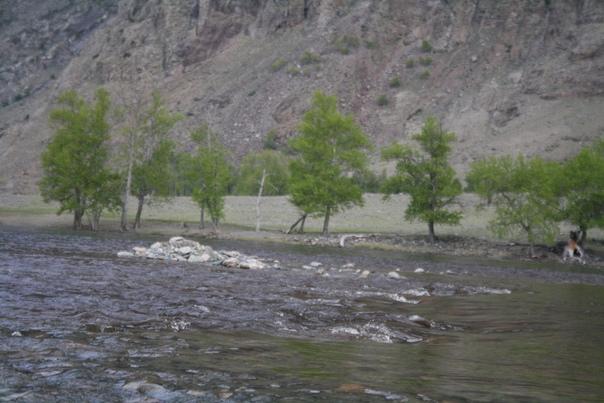 В реке очень много камней и когда она пересыхает это похоже на спину крокодила, крадущегося за жертвой.