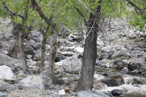 Деревья среди камней