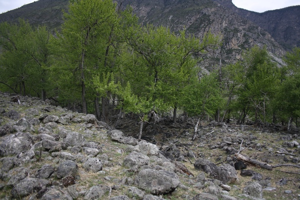 Горная река пробила себе русло и прикрылась деревьями. Кажется, что это примета в горах, деревья растут только в достатке воды.