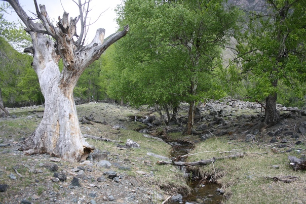 Красиво высохшее дерево