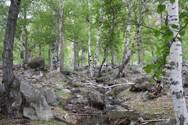 Почти лесной пейзаж