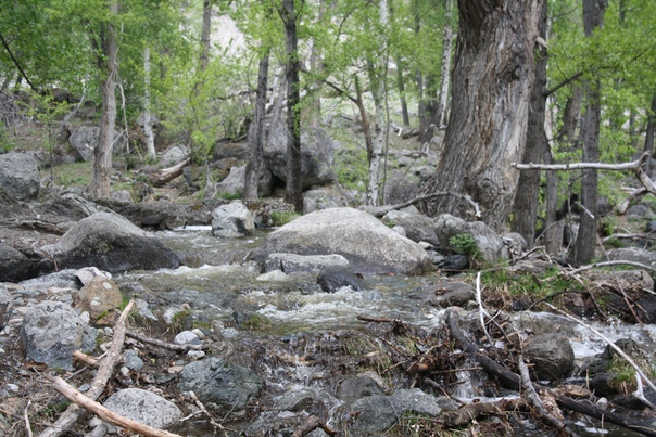 Мощь реки выражается разломами и гладкостью камней.