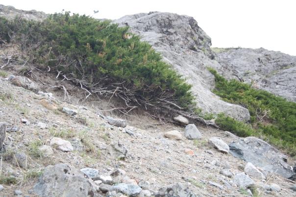 На горе довольно много растительности.