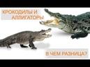 Крокодил и аллигатор! В чем разница и как отличить